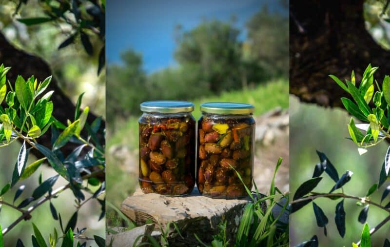Olive picking Mani Peloponnese recipe pickled olives